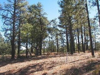 5893 CAPPS TRAIL, Pinedale, AZ 85934 - Photo 1