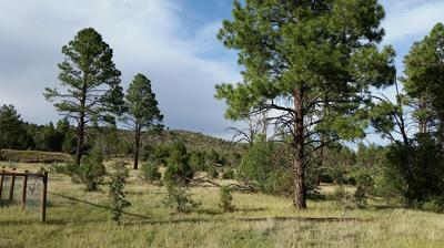 5194 PINEDALE WASH RD, Pinedale, AZ 85934 - Photo 1