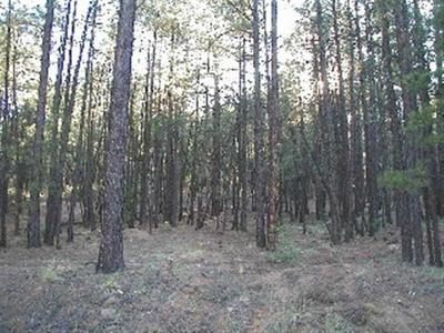 5518 FOREST DRIVE NORTH DRIVE, Pinedale, AZ 85934 - Photo 2