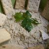 receta de babaganoush por arctarus