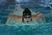 Julia Whitfield Women's Swimming Recruiting Profile