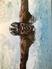 Ethan Kenty Men's Swimming Recruiting Profile