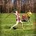 Athlete 1366555 square