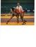 Raul Gierbolini-Rivera Wrestling Recruiting Profile