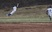 Ian Alves Baseball Recruiting Profile