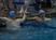 Cody Watkins Men's Swimming Recruiting Profile