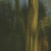 Louise Dudis, Tree 9, 2009