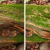 Louise Dudis, Fallen Tree 5068-5075, 2011-12