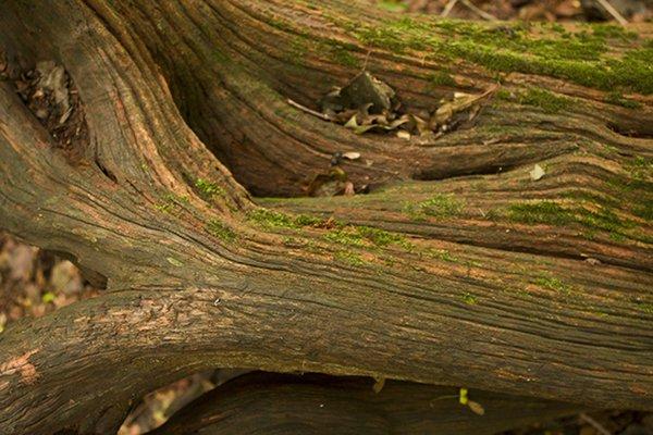 Fallen tree 5068