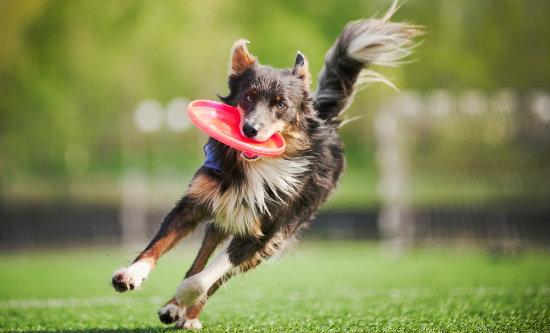 Conheça 6 brincadeiras de cachorro que podem ser feitas ao ar livre