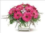 Gerbera Glory from Santa Barbara Flowers