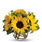 6164 - Sunny Sunflowers Santa Maria CA delivery.