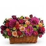 6434 - Burst of Beauty Basket Santa Maria CA delivery.