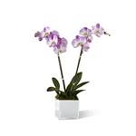 3916 - Pink Orchid Planter Lompoc, CA delivery.