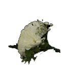 1359 - Ryan Buttonhole Santa Maria CA delivery.