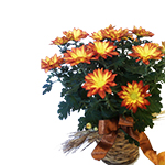 1894 - Autumn Chrysanthemum Santa Maria CA delivery.