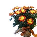 1894 - Autumn Chrysanthemum Lompoc, CA delivery.