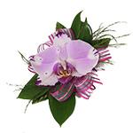 from Santa Barbara Flowers