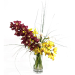 2167 - Cymbidium Orchid Vase US and Canada delivery.