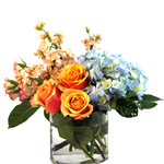Image of A glass cylinder for favorite premium blooms. Fragrant peach stock, Cherry Brandy Roses, blue Hydranges and pink spray roses.  Arranged to be enjoyed from one side.