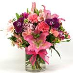 Image of Exquisite Spring is an arrangement of Phaleonopsis Orchid, Oriental Lily, fragrant stock and freesia, Dianthus, Gerbera, alstromeria and miniature rose buds in a glass cylinder.
