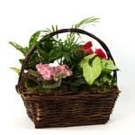 2384 - Plant Garden Basket - Small Santa Barbara, CA delivery.