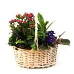 2387 - Plant Garden Basket - Small Santa Barbara, CA delivery.