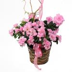 2510 - Azalea in Dark Basket Arroyo Grande, CA delivery.