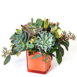 2701 - Simon Succulent Arrangement Lompoc, CA delivery.