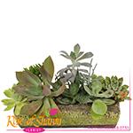 2743 - Kamali Succulent Garden Santa Maria CA delivery.