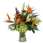 2783 - Arabella Arrangement US and Canada delivery.