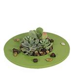 2817 - Zen Succulent Garden Santa Maria CA delivery.
