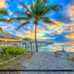 Dania Beach Florida Coconut Tree at Beach Entrance
