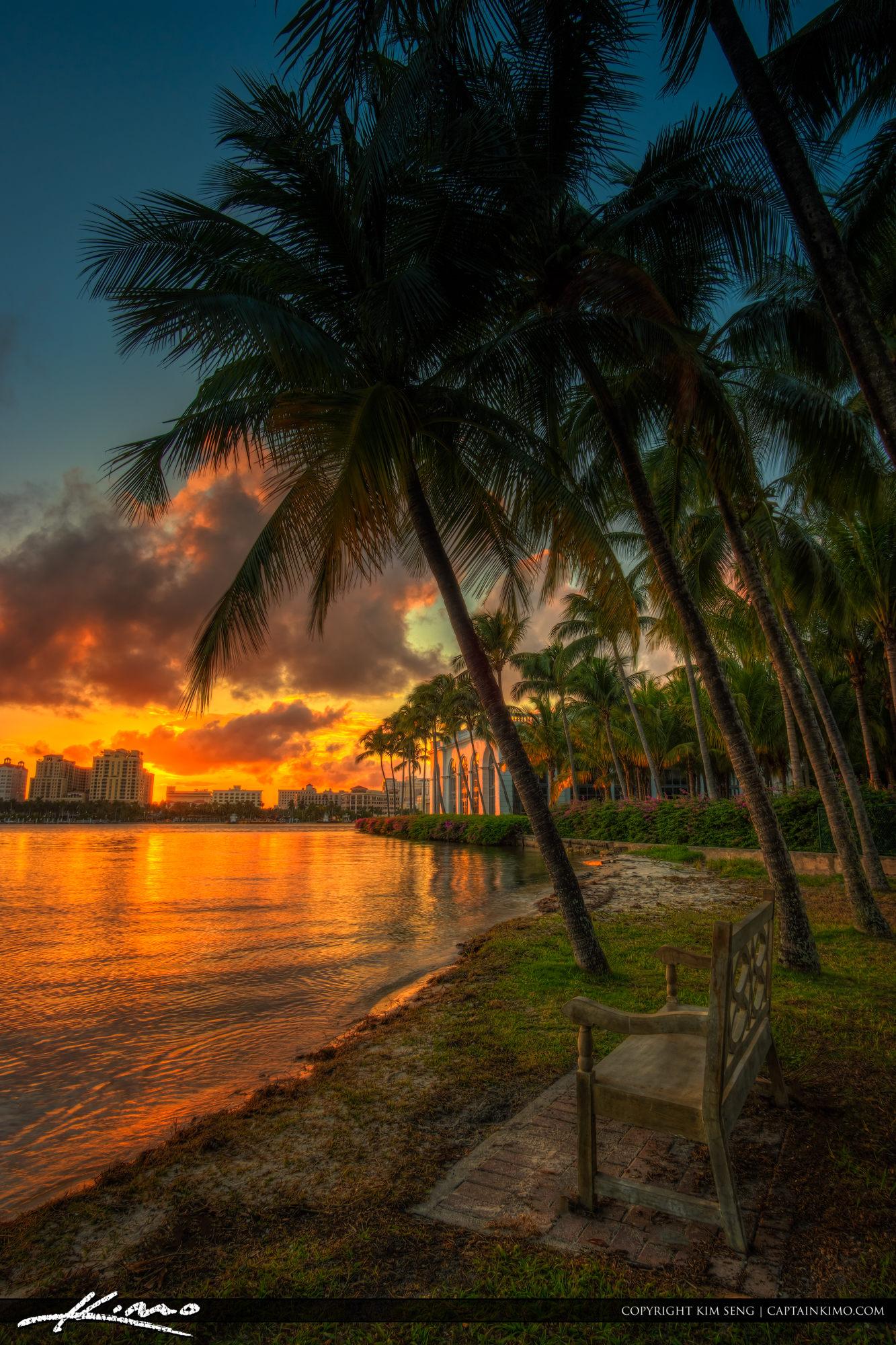 Coconut Palm Tree Sunset Palm