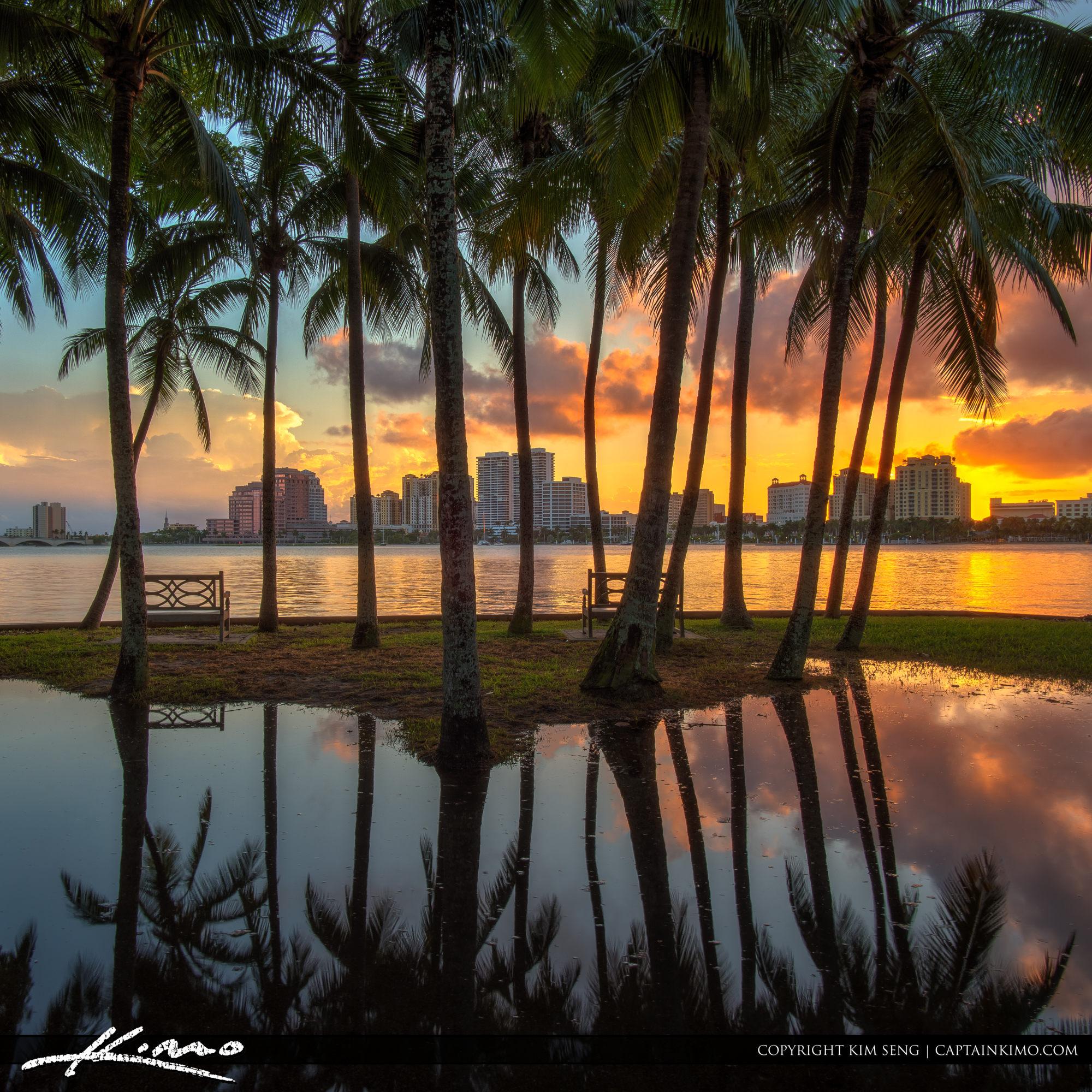Palm Beach Island Coconut Tree