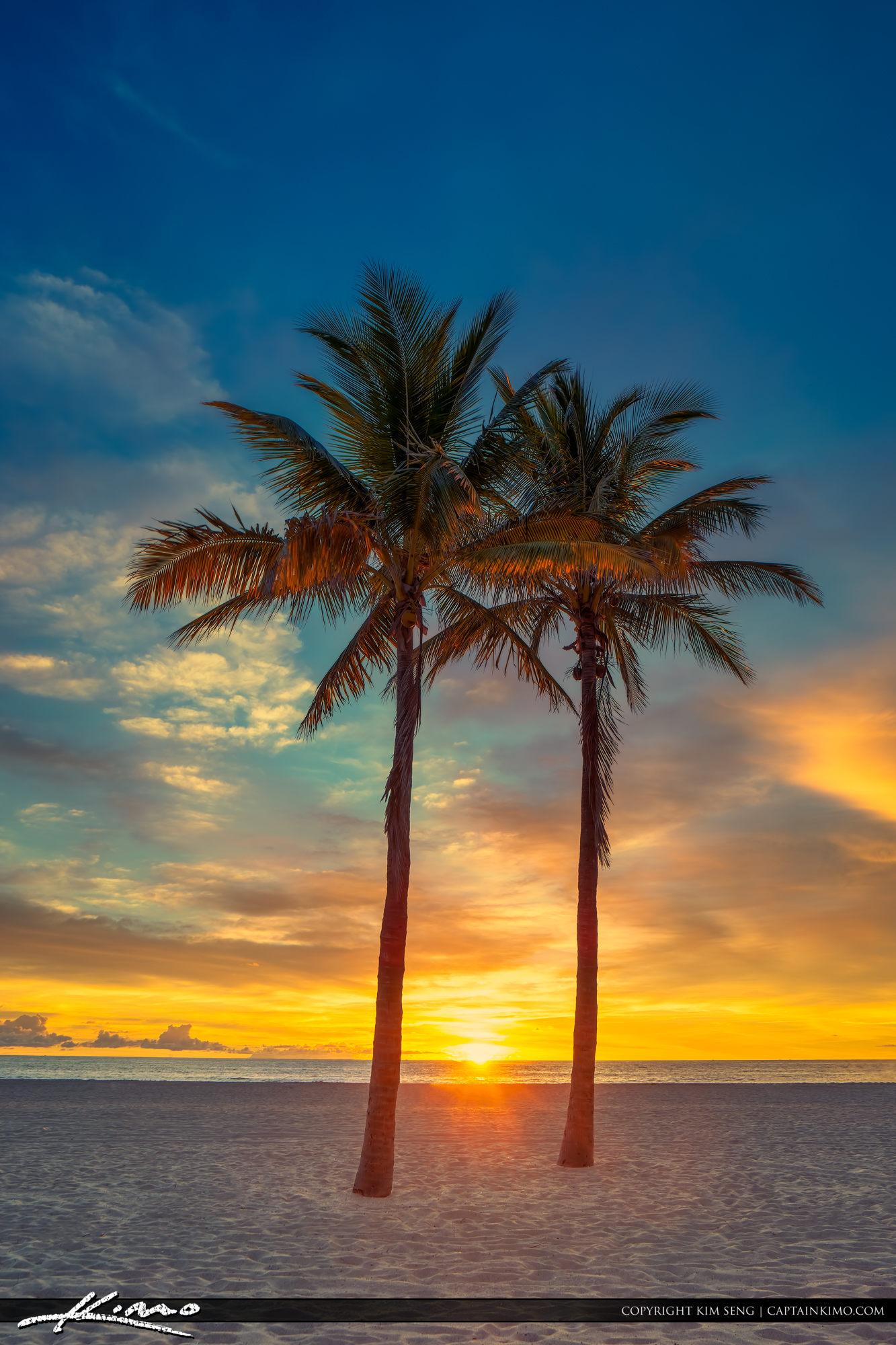 Two Coconut Palm Tree Sunrise