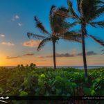 Coconut Tree Aurora
