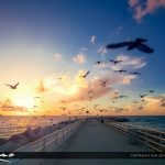 Sunrise Jupiter Inlet Pigeons Over the Jetty