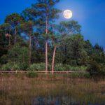Acreage Pines Natural Area Moon Rise