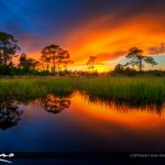 Acreage Pines Natural Area Sunset Loxahatchee Florida
