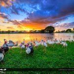 Lake Sunset Palm Beach Gardens Florida with Ducks and Ibis