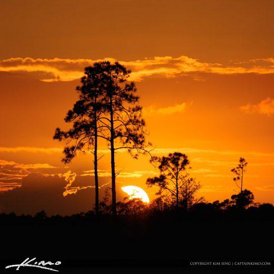 Sunset behind the Pine Trees in Jupiter Florida