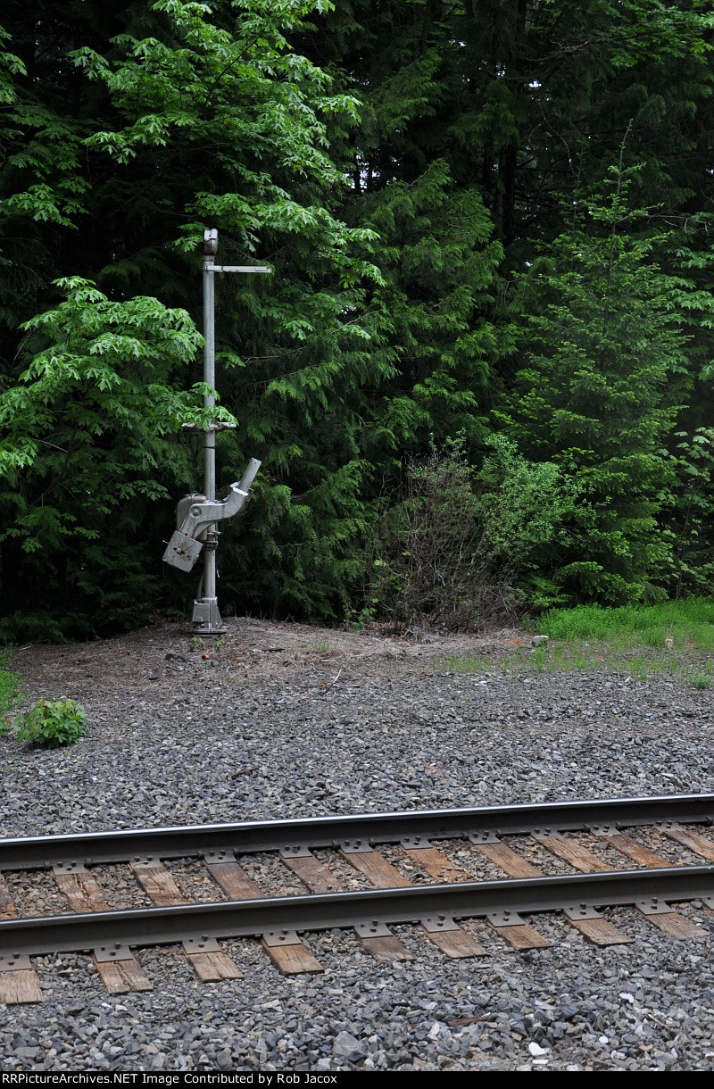Abandoned grade crossing in the forest