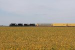 NS 1100 & 9248 sit among the nearly ripe bean fields with 27V