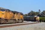 UP trains meet amid the orange groves
