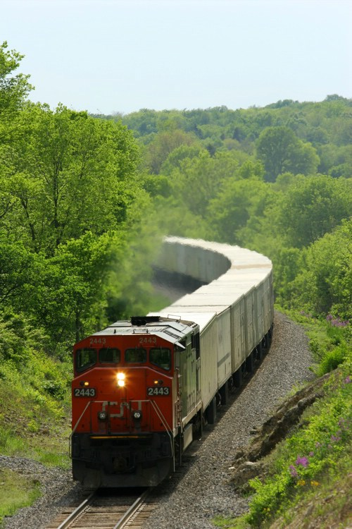 CN 2443 Pulls Triple Crown 256 East at Rich Valley, IN