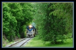 DH 5017 in a tunnel of trees