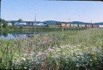 BUOI pastoral scene
