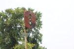 CNJ Signals