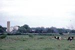 Railfan cow
